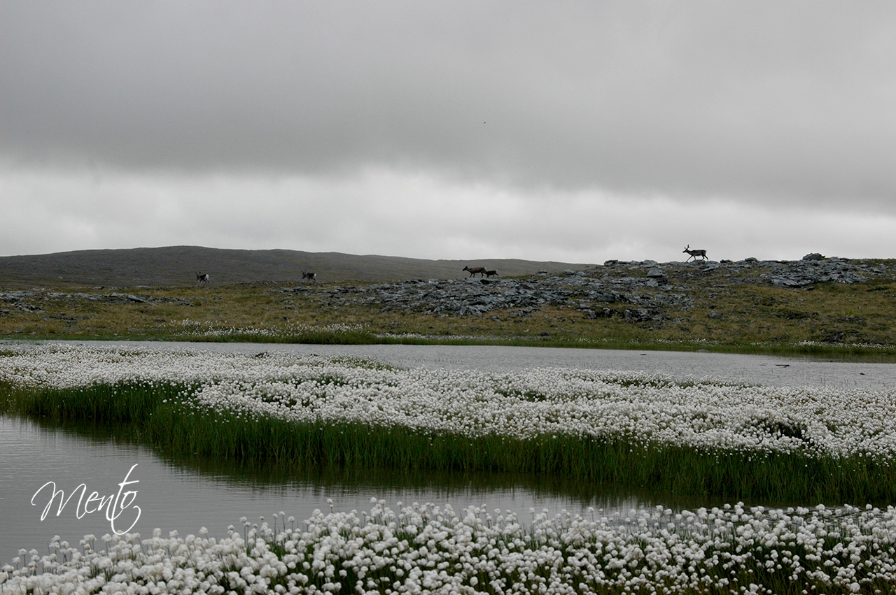 Escandinavia-03-89