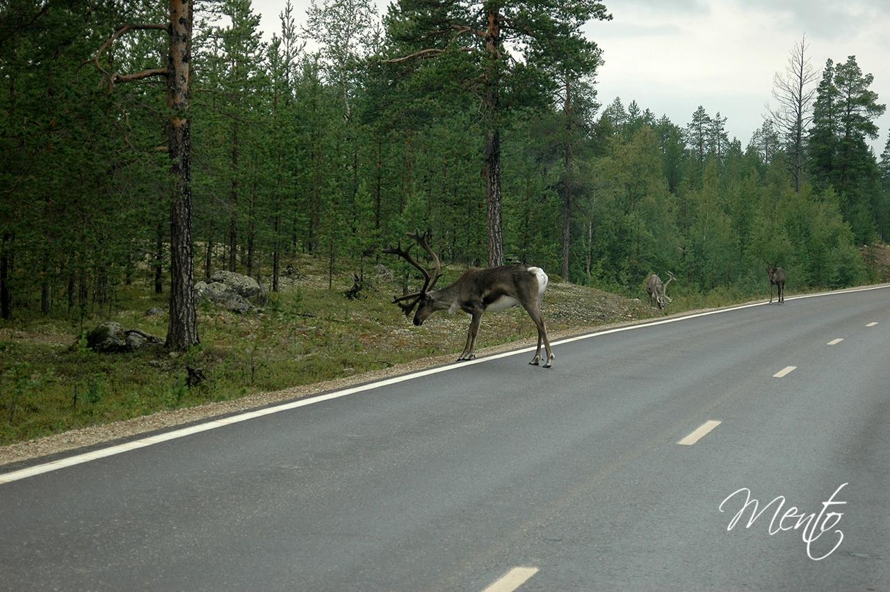 Escandinavia-02-81