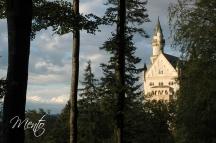 Tirol (229)